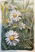Wild Daisies, Rouge Valley, ON
